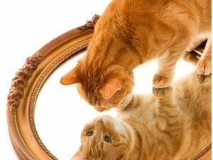 13 races de chats roux
