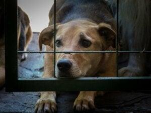 La Corée du Sud lutte contre les abus et la négligence en accordant un statut légal aux animaux
