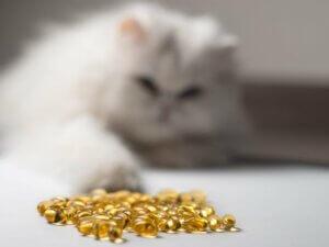 14 bienfaits de l'huile de poisson pour les chats