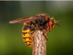 Les 10 insectes les plus venimeux au monde