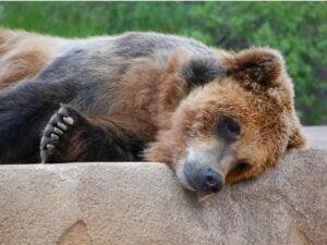 """Comme le bon """"frère des ours"""" qu'il est, Joaquin Phoenix lève la voix pour défendre ces animaux"""