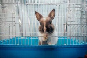 Pourquoi les lapins tapent-ils de la patte ?
