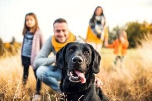 9 choses que fait un chien pour attirer l'attention