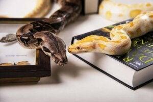 Les différents types de serpents domestiques