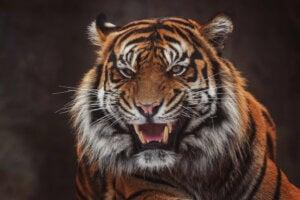 8 mammifères menacés