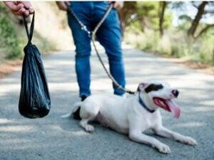 Selles noires chez le chien : pourquoi ?