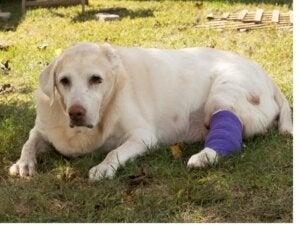 Les 7 cancers les plus courants chez les chiens