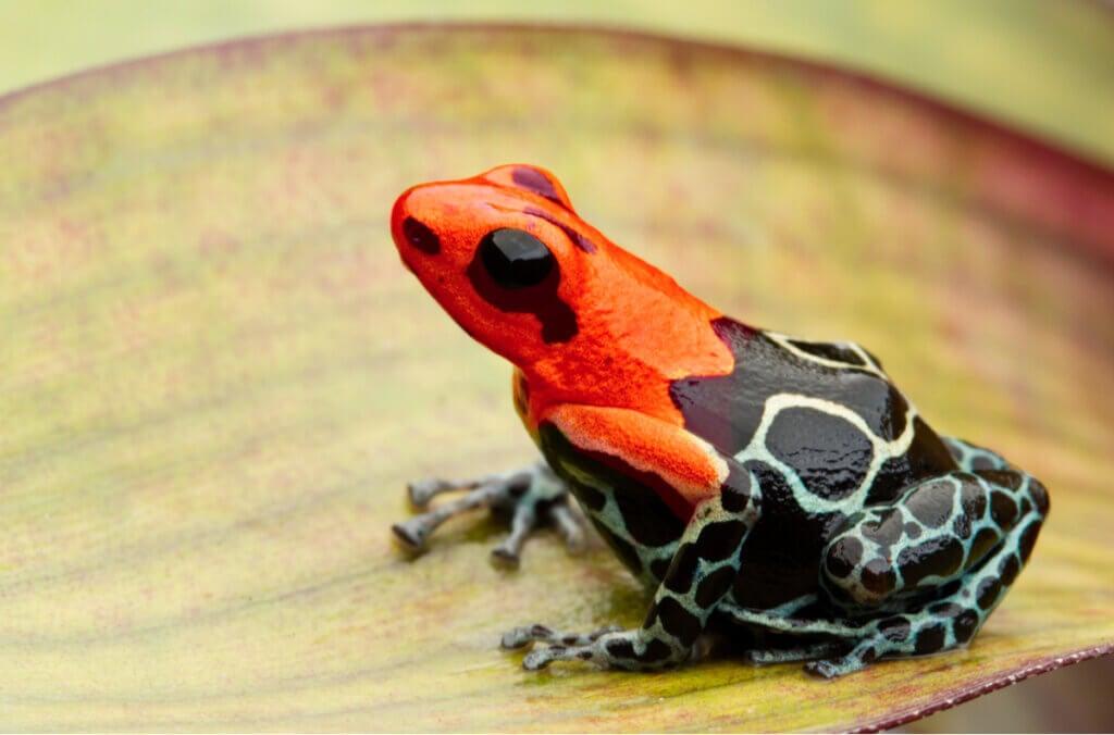 7 amphibiens venimeux