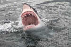 Quel est l'animal qui a le plus de dents ?