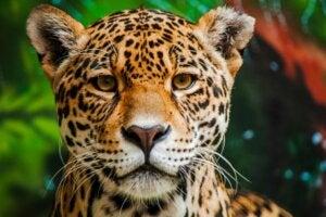 Les 15 animaux les plus dangereux d'Amazonie