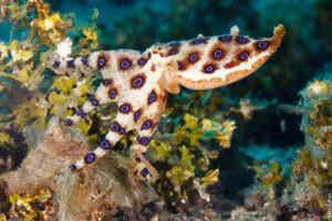 Les 12 animaux marins les plus dangereux