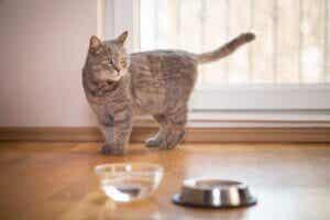 Pourquoi mon chat boit-il de l'eau avec sa patte ?