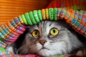 12 symptômes qui indiquent que votre chat est stressé