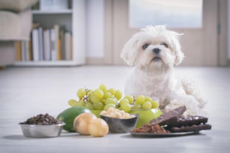 Les chiens peuvent-ils manger des noix ?