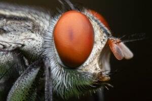 10 curiosités sur les mouches