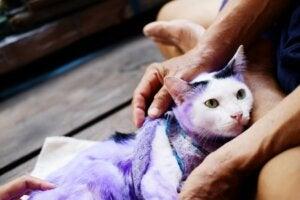 15 dangers domestiques qui pourraient tuer votre chat