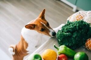 Les chiens peuvent-ils manger des épinards ?