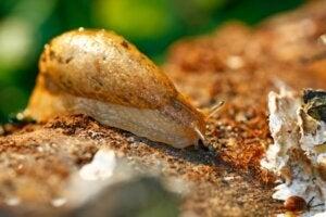 10 curiosités sur les limaces
