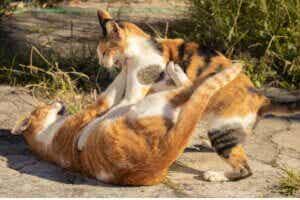 Bagarre de chats : comment les séparer ?