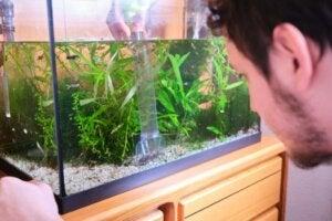 Eau d'aquarium verte : causes et solutions