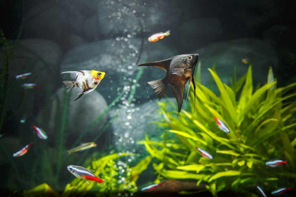 10 astuces pour une eau d'aquarium cristalline