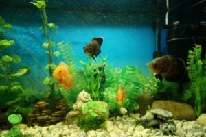 Eau d'aquarium trouble : causes et solutions