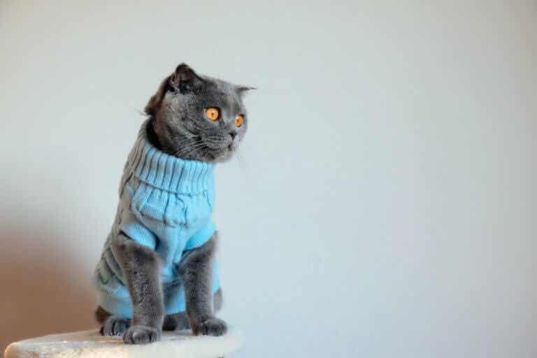 Pourquoi ne faut-il pas habiller les chats ?