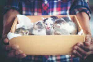 Comment éliminer les puces chez les chatons nouveau-nés ?