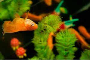Pourquoi les poissons de mon aquarium meurent-ils ?