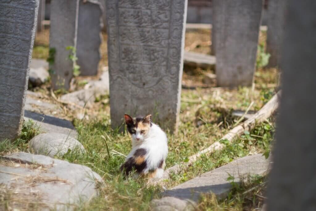 12 symptômes qui indiquent qu'un chat est sur le point de mourir