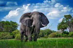 Combien pèse un éléphant ?