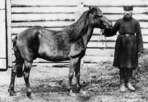Tarpan (cheval) : origine et caractéristiques