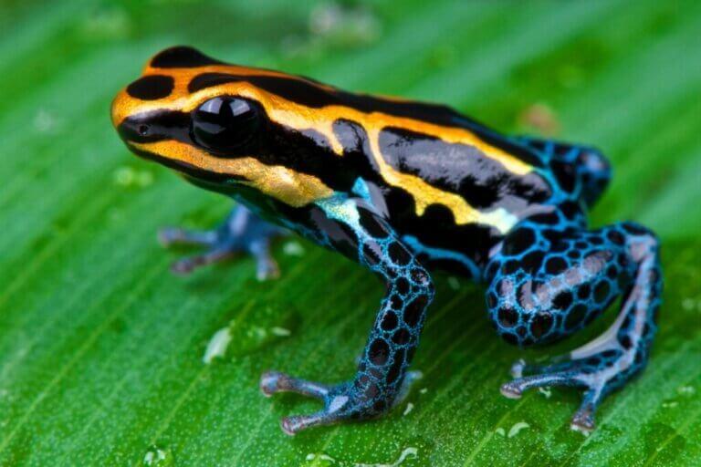 Les 12 plus beaux animaux de l'Équateur