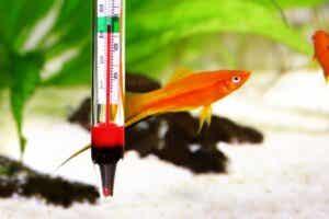 Quelle est la température idéale pour un aquarium d'eau douce ?