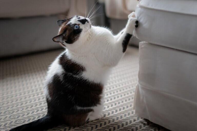 Comment empêcher mon chat de grimper sur les meubles ?