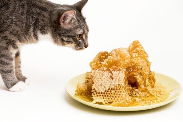 Le miel est-il bon pour les chats ?