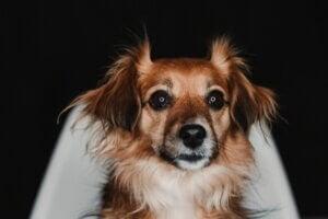 Que faire si mon chien a peur du noir ?