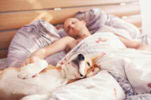 Est-il sain de dormir avec son chien ?