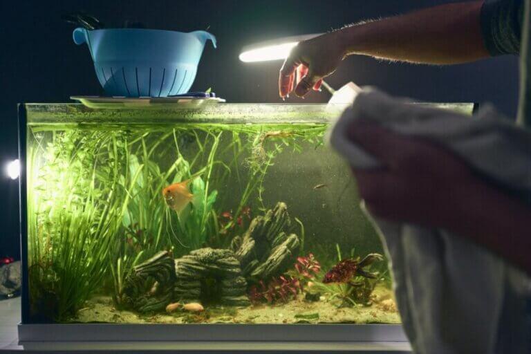 Comment éclairer un aquarium ?