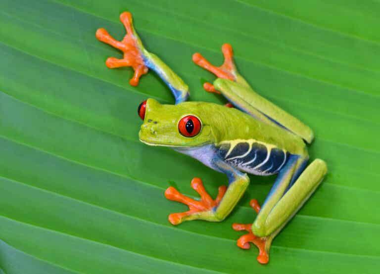 Les 12 plus beaux animaux du Costa Rica