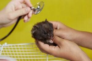 12 symptômes qui indiquent que votre hamster va mourir