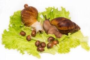 Comment naissent les escargots ?