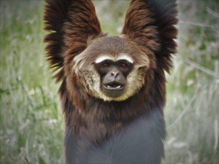 10 curiosités sur les primates