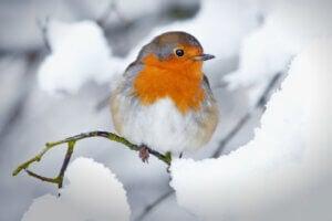 Les 10 oiseaux les plus communs en Espagne