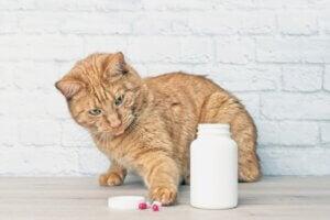 Le paracétamol est-il toxique pour les chats ?