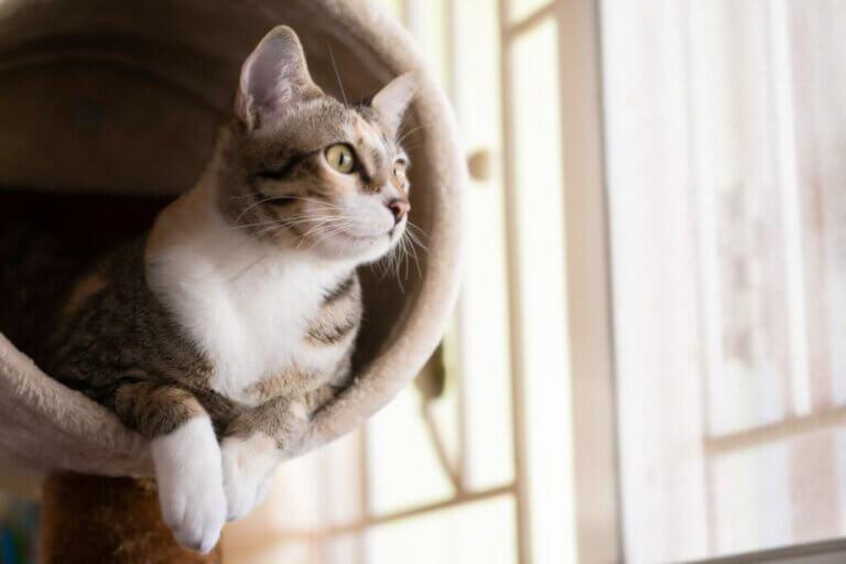 Comment faire une salle de gym à domicile pour les chats ?