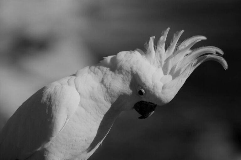 Stress chez les oiseaux domestiques : causes, symptômes et solutions