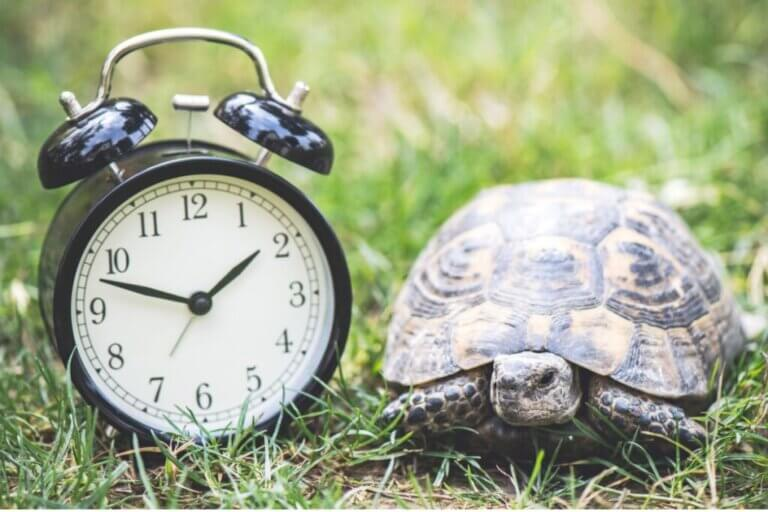 Combien d'années vit une tortue domestique ?