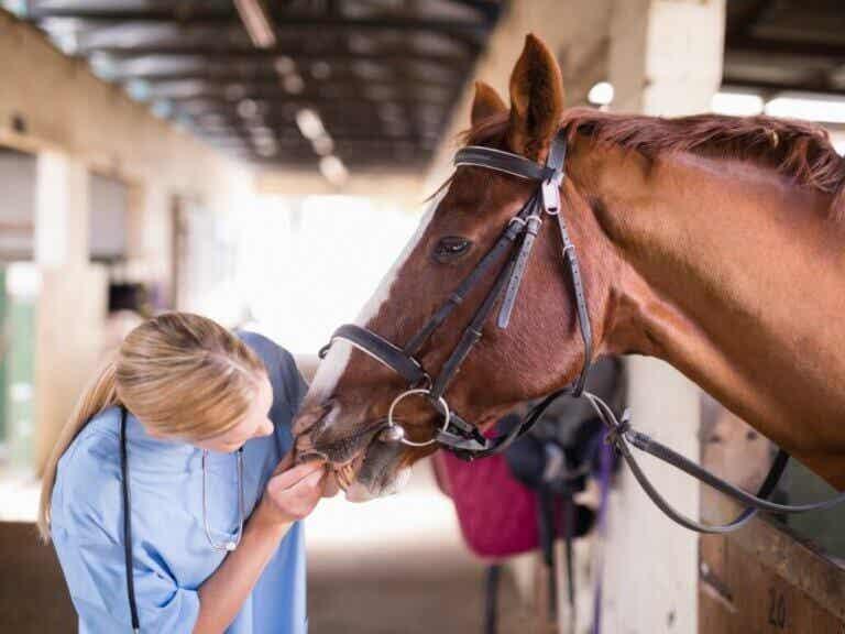 Les troubles métaboliques chez les chevaux