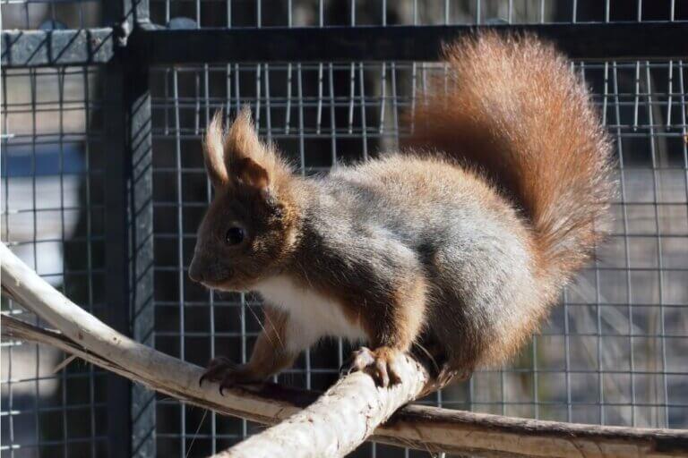 7 soins à prodiguer à un écureuil